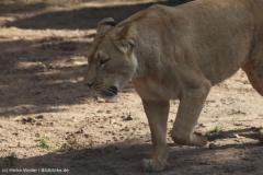 Zoo_Hannover_180915_IMG_8729