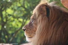 Zoo_Hannover_180915_IMG_8730