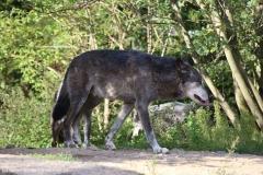 Zoo_Hannover_180915_IMG_8737