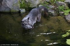 Zoo_Hannover_180915_IMG_8740