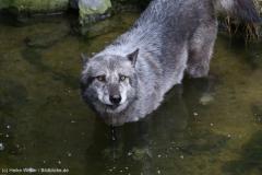 Zoo_Hannover_180915_IMG_8744