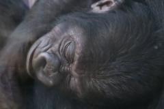 Zoo_Hannover_180915_IMG_8973