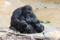 Zoo_Hannover_180915_IMG_9026