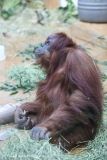 Zoo_Hannover_220116_IMG_2900