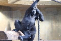 Zoo_Hannover_220116_IMG_2904