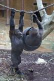 Zoo_Hannover_220116_IMG_2923
