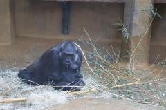 Zoo_Hannover_220116_IMG_2944
