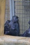 Zoo_Hannover_220116_IMG_2975