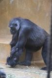 Zoo_Hannover_220116_IMG_2976