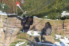 Zoo_Hannover_220116_IMG_2980