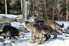 Zoo_Hannover_220116_IMG_3034