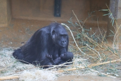 Zoo_Hannover_220116_IMG_2930