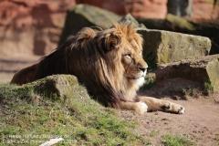 Zoo_Hannover_220319_IMG_9269