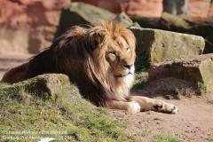 Zoo_Hannover_220319_IMG_9271