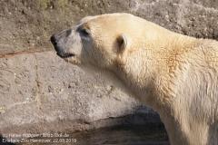 Zoo_Hannover_220319_IMG_9287