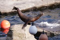 Zoo_Hannover_220319_IMG_9370