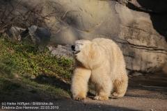 Zoo_Hannover_220319_IMG_9449
