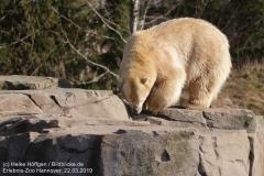 Zoo_Hannover_220319_IMG_9462