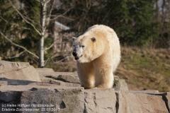 Zoo_Hannover_220319_IMG_9472