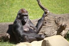 Zoo_Hannover_220416_IMG_0902