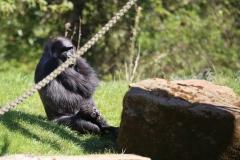 Zoo_Hannover_220416_IMG_0905