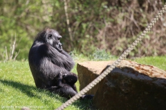 Zoo_Hannover_220416_IMG_0915