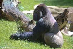 Zoo_Hannover_220416_IMG_0922