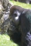 Zoo_Hannover_220416_IMG_0938