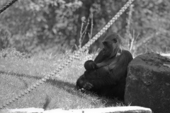 Zoo_Hannover_220416_IMG_0965