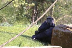 Zoo_Hannover_220416_IMG_0969