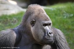 Zoo_Hannover_220416_IMG_0975