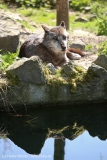 Zoo_Hannover_220416_IMG_0983