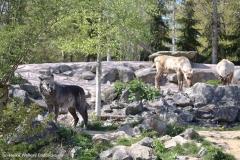 Zoo_Hannover_220416_IMG_0991