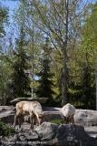 Zoo_Hannover_220416_IMG_0993