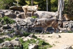 Zoo_Hannover_220416_IMG_1002