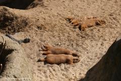 Zoo_Hannover_220416_IMG_1003