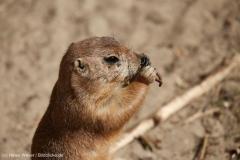 Zoo_Hannover_220416_IMG_1009