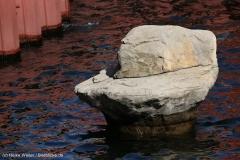 Zoo_Hannover_220416_IMG_1022
