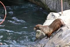 Zoo_Hannover_220416_IMG_1124