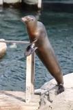 Zoo_Hannover_220416_IMG_1133