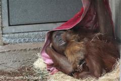 Zoo_Hannover_230813_IMG_4034