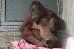 Zoo_Hannover_230813_IMG_4048