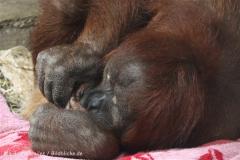 Zoo_Hannover_230813_IMG_4053