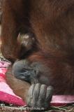 Zoo_Hannover_230813_IMG_4054