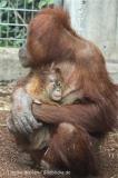 Zoo_Hannover_230813_IMG_4069