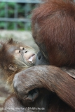 Zoo_Hannover_230813_IMG_4102