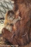 Zoo_Hannover_230813_IMG_4117