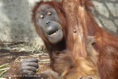 Zoo_Hannover_230813_IMG_4121