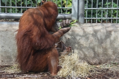 Zoo_Hannover_230813_IMG_4124