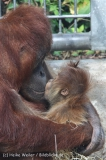 Zoo_Hannover_230813_IMG_4138